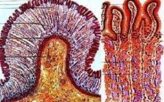 Главные клетки желез желудка вырабатывают