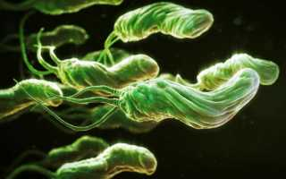 Почему при поражении хеликобактером появляется запах изо рта