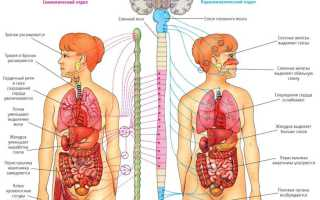 Боли при неврозе у мужчин и женщин: механизм развития, способы устранения