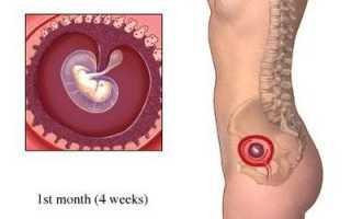 Первый месяц беременности, протекающий сам по себе