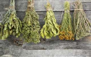 Желчегонные травы при застое желчи. Какие сборы и травы обладают желчегонным действием и как их принимать