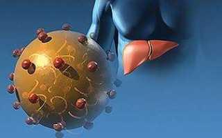 Возбудитель гепатита А, его характеристики и симптомы. Возможности лечения и профилактики