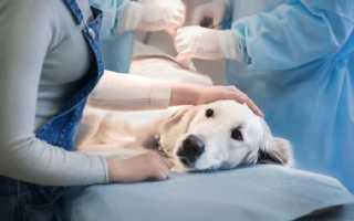 Симптомы, разновидности и лечение вирусного энтерита у собак