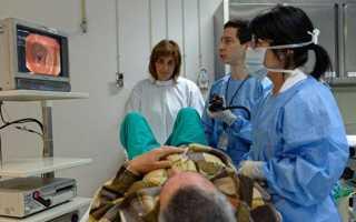 Методы обследования тонкого кишечника, их преимущества и недостатки