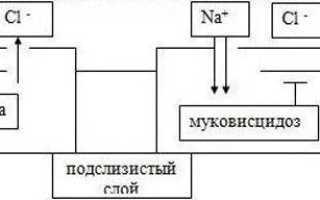 Муковисцидоз — этиология, патогенез, патоморфология