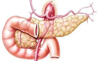 Анатомия, кровоснабжение и иннервация поджелудочной железы