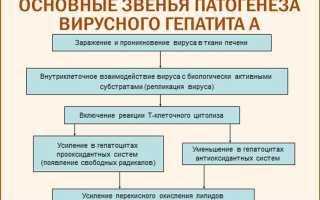 Болезнь Боткина: какой это гепатит, симптомы, лечение и признаки у взрослых