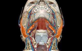 МРТ слюнных желез в Москве: цены, сделать томографию слюнных желез недорого