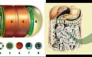 Функциональное расстройство кишечника