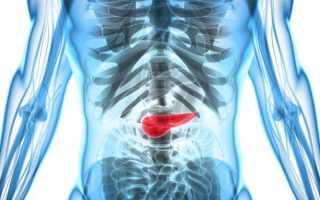Какую функцию выполняет поджелудочная железа у человека