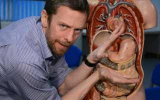 Анатомия и физиология  желудка и двенадцатиперстной кишки</a></noscript>