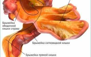Что такое брыжейка кишечника, ее расположение и функции