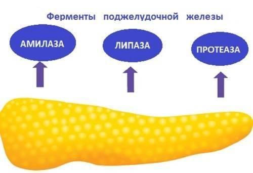 podzheludochaja-zhl-5-500x342.jpg