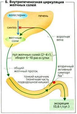 250px-Naglydnay_fiziologiya256.jpg