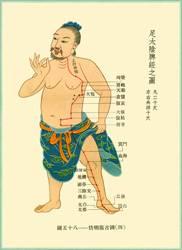 10-spleen.jpg