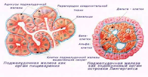 gormony-podzhel-2-500x260.jpg
