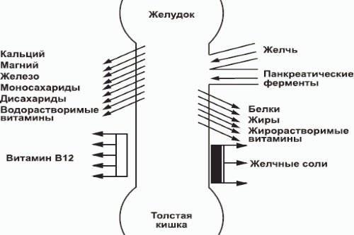 Vsasyvanie-veshhestv-v-tonkom-kishechnike.jpg