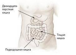 im244-Illu_small_intestine-Russian.JPG