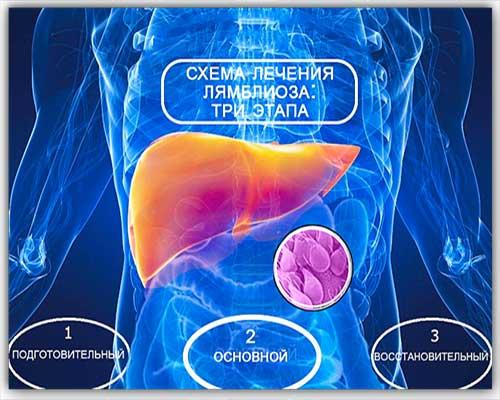 схема лечения лямблиоза у взрослых