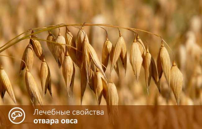 otvar_oves_gp_01.jpg