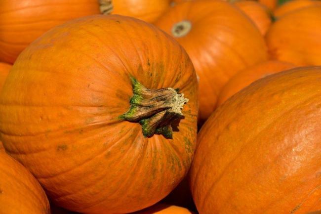 pumpkin-3636243_1280-1024x683.jpg