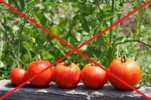 pomidori-300x200.jpg
