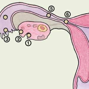 ovulacii-stadii.jpg