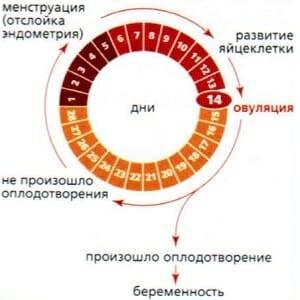 kogda-imenno-pri-ovuljacii-mozhno-zaberemenet1.jpg