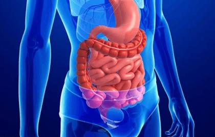 Работа кишечника