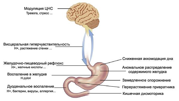 patogenez-dispepsii.png