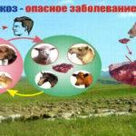 jehinokokkoz-pecheni-150x150.jpg