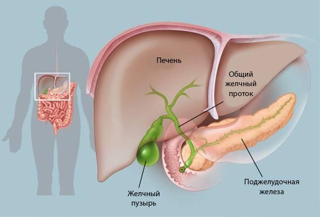 Anatomiya-2-1.jpg