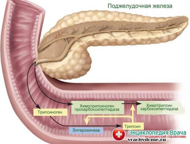pancreatic-juice.jpg