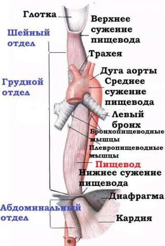 suzhenie-pishhevoda-simptomy-i-lechenie-2.jpg