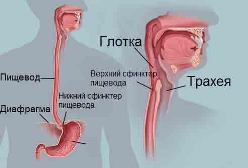 невроз пищевода симптомы лечение.jpg