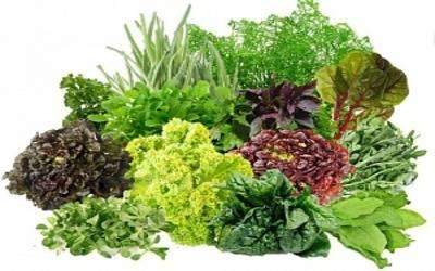 salat_002.jpg