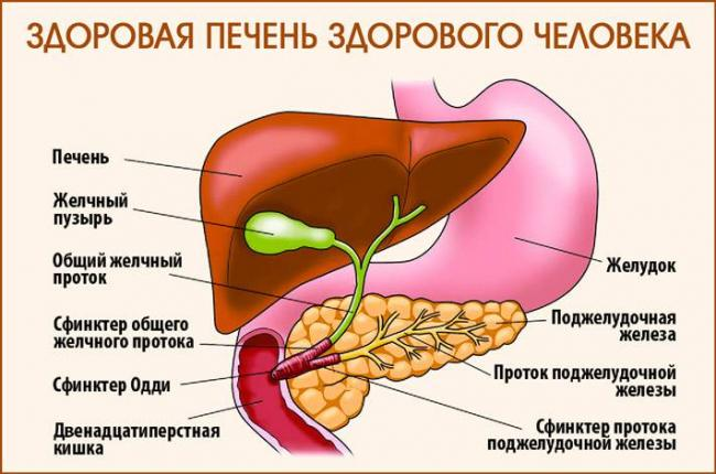 narodnye-sredstva-ot-boli-v-pecheni_22.jpg