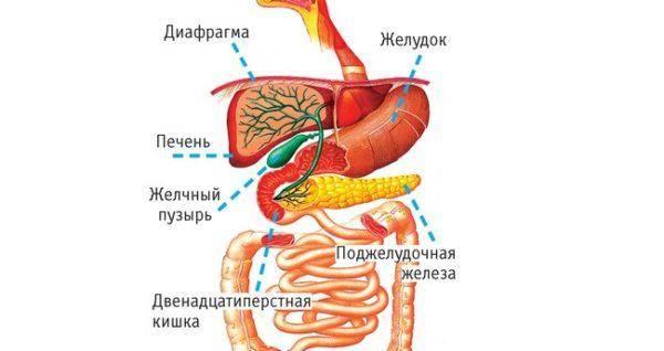 CHashhe-vsego-boli-v-pravom-boku-vyizyivayutsya-zabolevaniyami-vnutrennih-organov-raspolozhennyih-s-e`toy-storonyi-tela-1-600x318.jpg