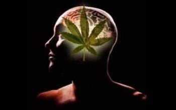 mify-o-marihuane.jpg