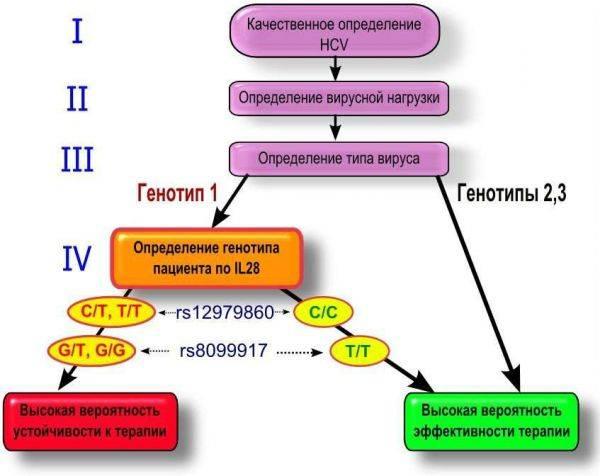 genotip-gepatc-3-600x476.jpg