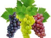 vinograd-200x150.jpg