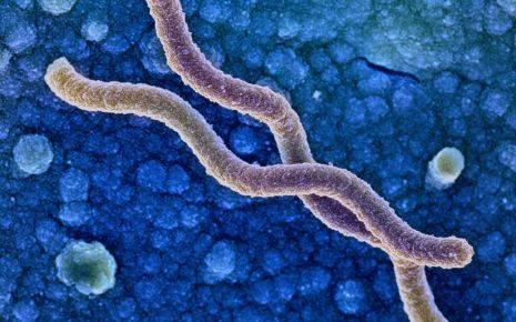 helicobacter_pylori-465x290.jpg