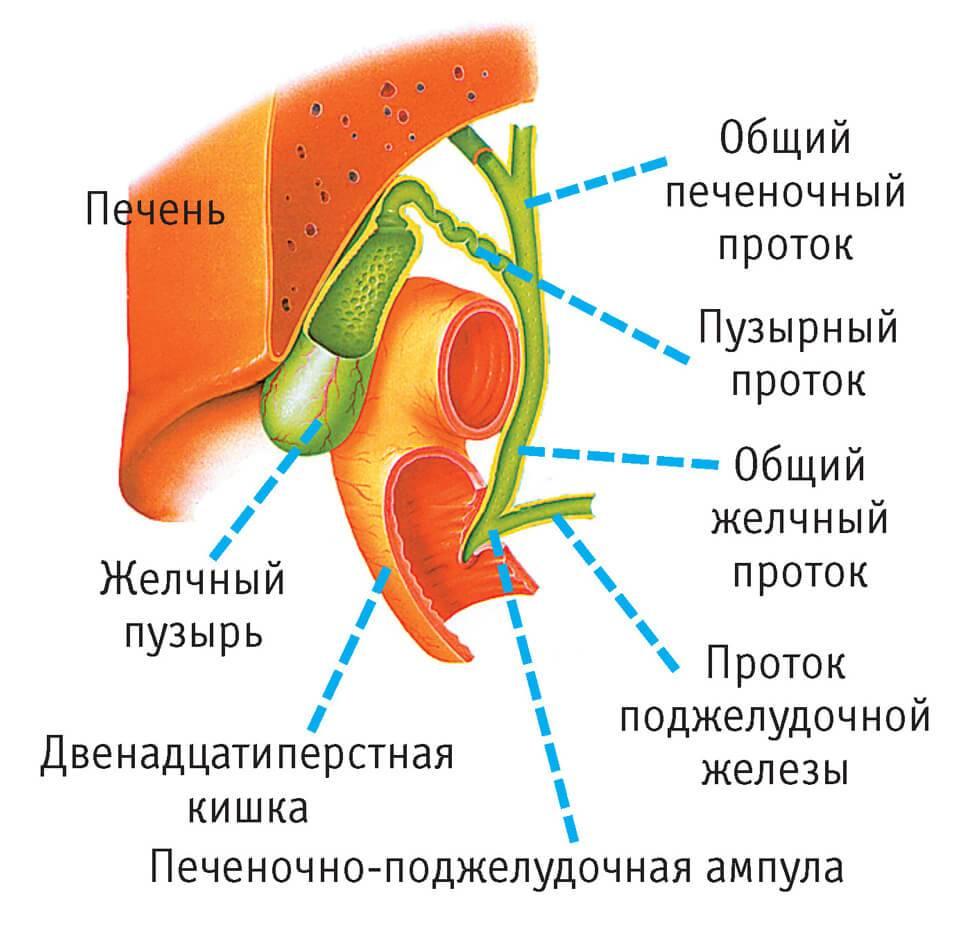 Patologii-zhelchnogo-puzyrya-i-protokov.jpg