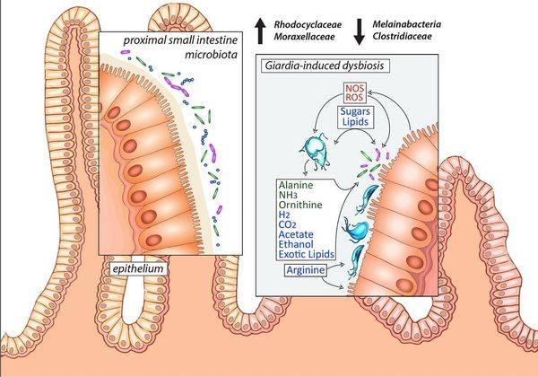 zhiznedeyatelnost-parazita-v-kishechnike_s.jpg