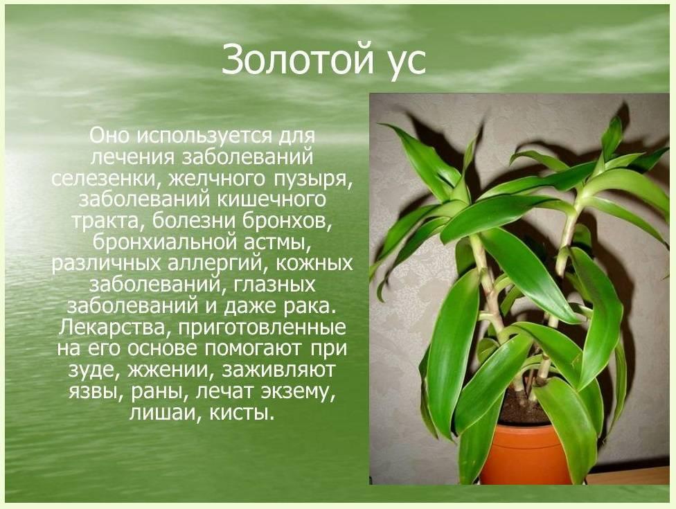 v-domashnih-usloviyah-4.jpg