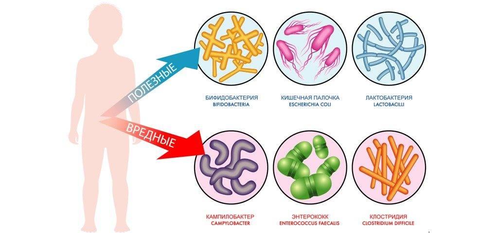 бактерии полезные и вредные