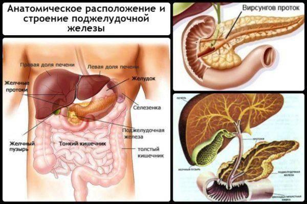 Anatomicheskoe-raspolozhenie-i-stroenie-podzheludochnoy-zhelezyi-600x400.jpg