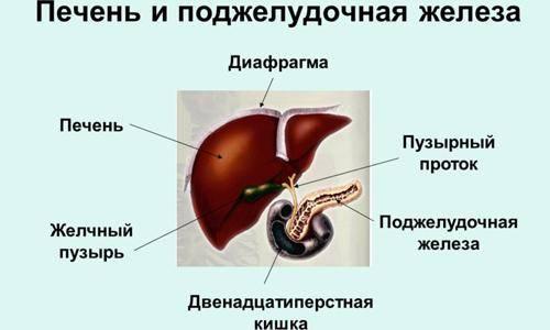 Pechen-i-podzheludochnaya-zheleza.jpg