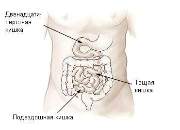 illu-small-intestine-03.jpg