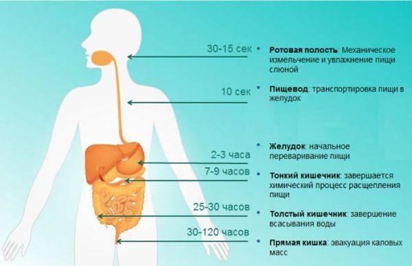 fermenty-podzhelprep-3-600x388.jpg
